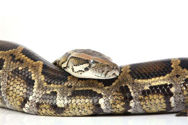 Python Kostenlose Fotos