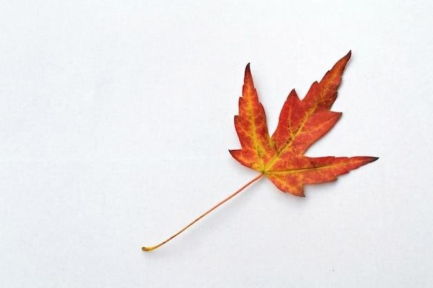 Red Herbst Blatt\