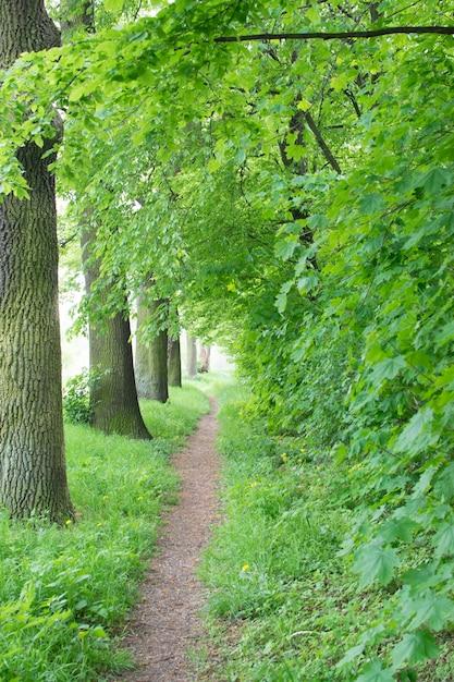 Radweg oder landwanderweg im alten grünen park. frühlingsgasse mit kastanien und eichen Premium Fotos