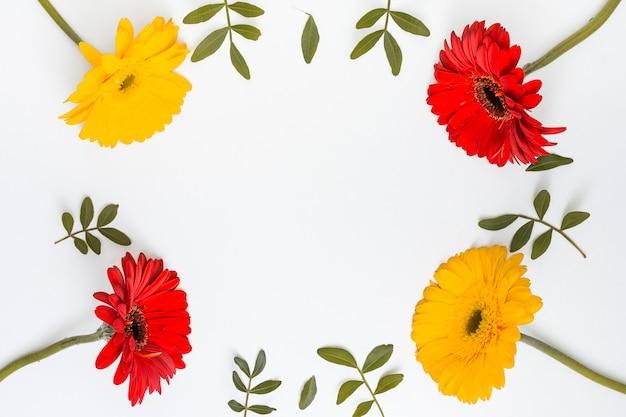 Rahmen aus gerberablumen und grünen blättern Kostenlose Fotos