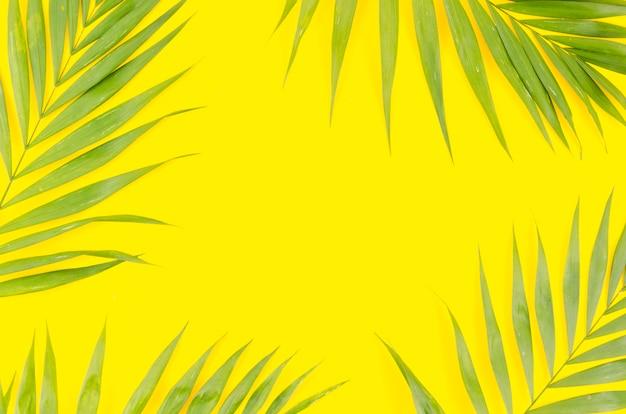 Rahmen aus grünen palmblättern Kostenlose Fotos