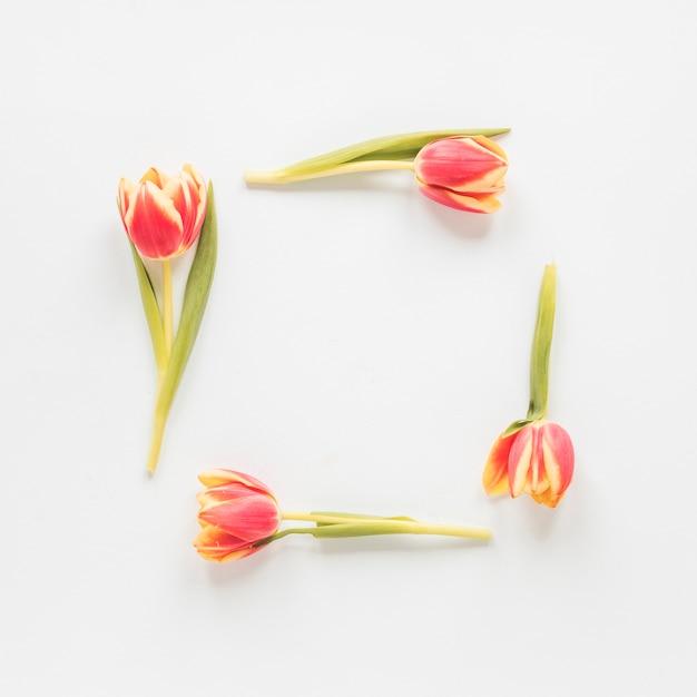 Rahmen aus roten tulpen auf dem tisch Kostenlose Fotos