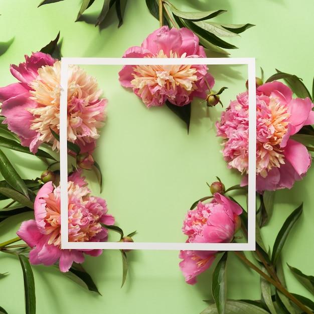 Rahmen des weißen quadrats mit rosa pfingstrosen auf grünem hintergrund Premium Fotos