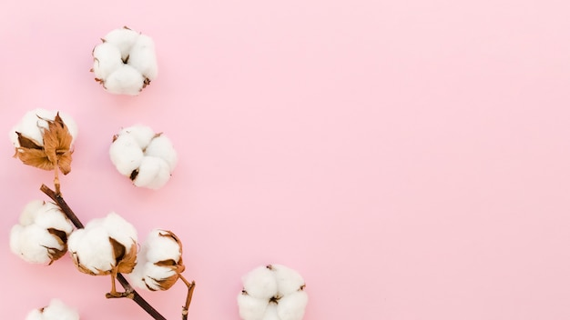Rahmen mit baumwollblumen auf rosa hintergrund Kostenlose Fotos