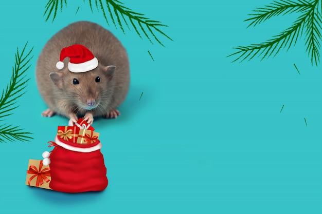 Ratte - symbol von 2020 in einem weihnachtsmann-hut und mit einer tasche von geschenken auf tadellosem hintergrund Premium Fotos