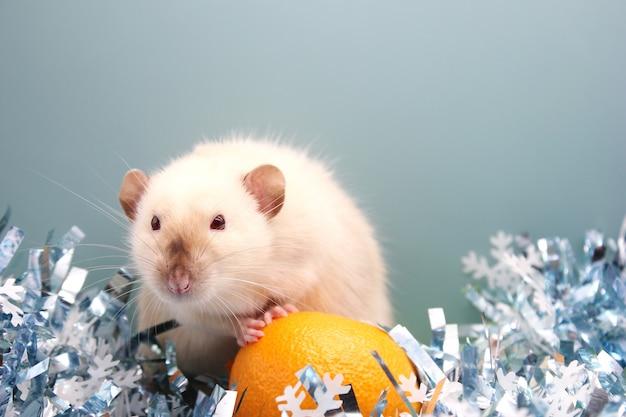 Ratte und die mandarine. die ratte ist ein symbol des neuen jahres 2020. Premium Fotos
