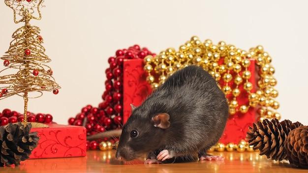 Ratten-dumbo vor kasten mit dekor des neuen jahres, symbol des jahres Premium Fotos