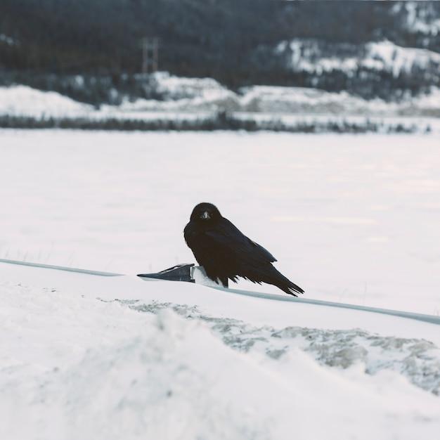 Raven auf schneebedeckten hintergrund Kostenlose Fotos