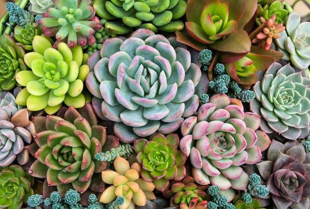Rechteckige anordnung von sukkulenten; kaktus sukkulenten in einem pflanzer Kostenlose Fotos