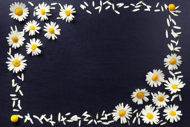 Rechteckiger rahmen aus weißen gänseblümchen auf schwarzem hintergrund blumenmuster mit kopie raum lag flach blumen draufsicht Premium Fotos