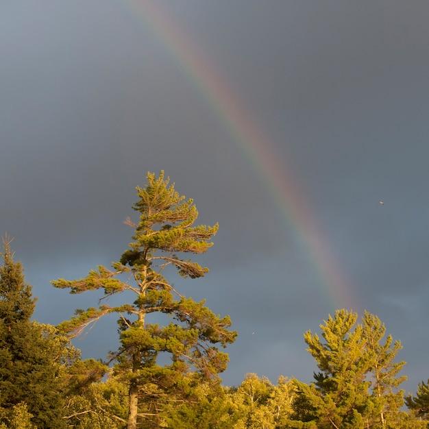 Regenbogen im himmel über see des holzes, ontario Premium Fotos