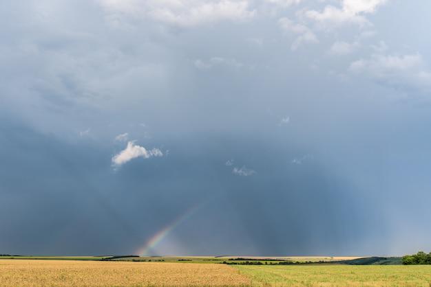 Regenbogen über den feldern nach einem regen im sommer, ein weizenfeld, der dunkle himmel mit wolken Premium Fotos