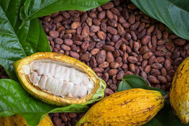 Reife kakaohülse und -bohnen eingerichtet auf rustikalem hölzernem hintergrund Premium Fotos