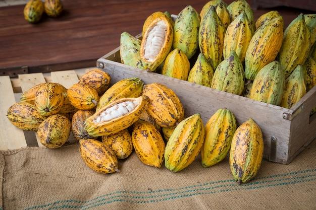 Reife kakaohülseneinrichtung auf rustikalem hölzernem hintergrund Premium Fotos