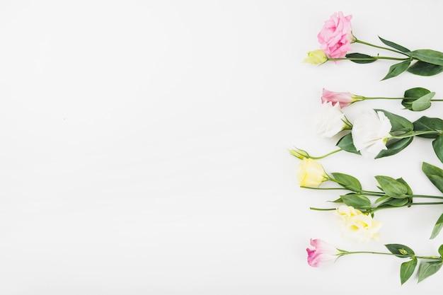 Reihe der schönen blumen auf weißem hintergrund Kostenlose Fotos