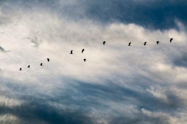 Reiherfliegen, zum auf weißer wolke des blauen himmels weich zu machen Premium Fotos