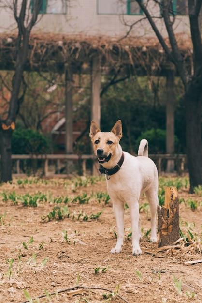 Reinrassiger hund zu fuß Kostenlose Fotos