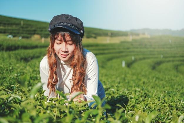 Reise-frau, die in teepflanze in chiang rai thailand geht Premium Fotos