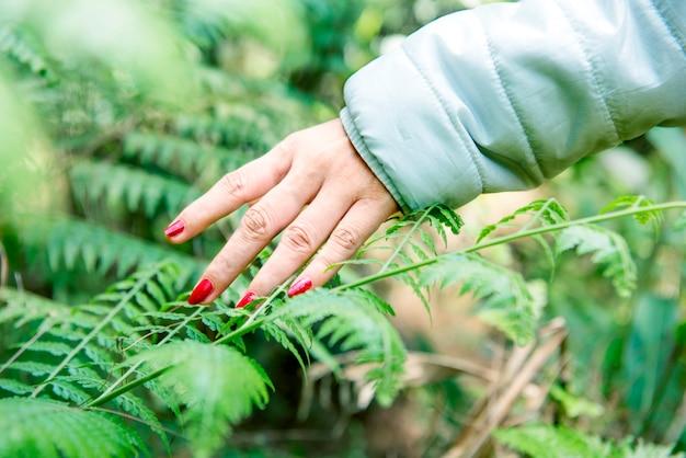 Reisendfrauenhand auf grünem blatt Premium Fotos