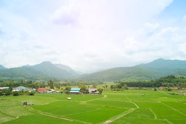Reisfeld mit dorf im ländlichen thailand. Premium Fotos