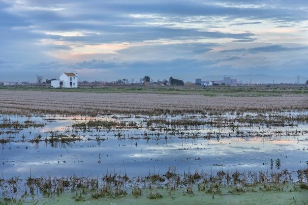 Reisfeld mit einer hütte in albufera von valencia bei sonnenuntergang. Premium Fotos