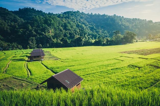 Reisfeld mit traditionellen häusern Premium Fotos