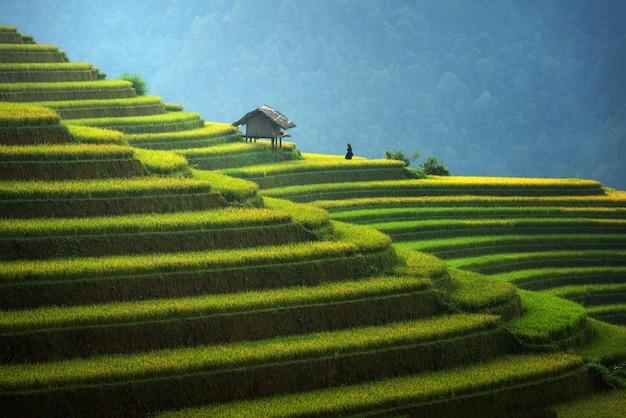 Reisfelder auf terassenförmig angelegt in der rainny jahreszeit bei mu cang chai, vietnam Premium Fotos
