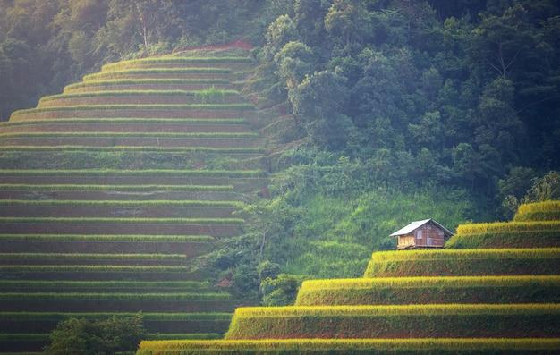 Reisfelder auf terassenförmig angelegten von mu cang chai, yenbai, vietnam. vietnam landschaften. Premium Fotos