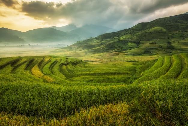 Reisfelder bereiten die ernte in nordwestvietnam vor. vietnam landschaften. Premium Fotos