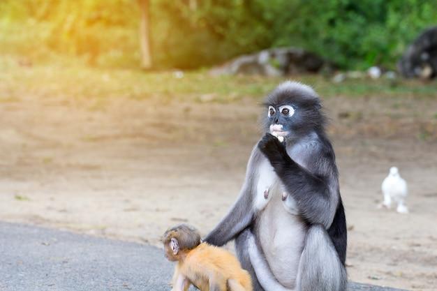 Reizende affen, nette makakengläser, lustiger affe lebt in einem naturwald von thailand Premium Fotos