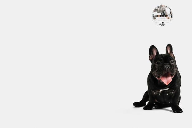 Reizende bulldoggenzusammensetzung mit discokugel Kostenlose Fotos