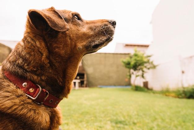 Reizender hund, der im garten aufwirft Kostenlose Fotos