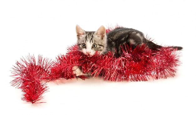 Reizendes kätzchen mit weihnachtsdekoration Premium Fotos
