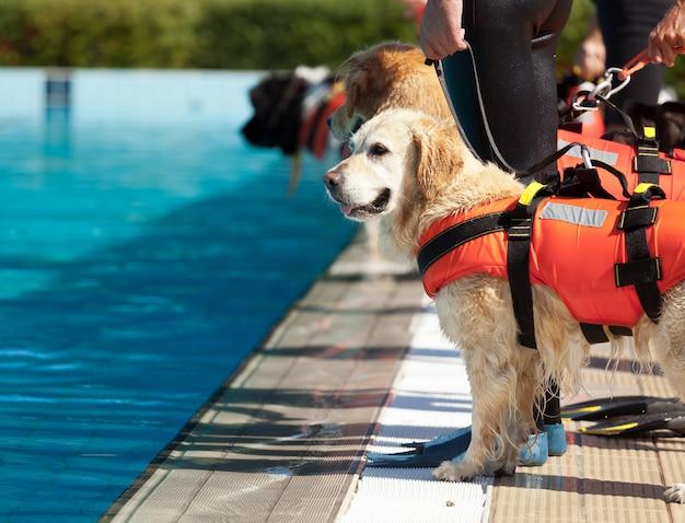 Rettungsschwimmer hund Premium Fotos