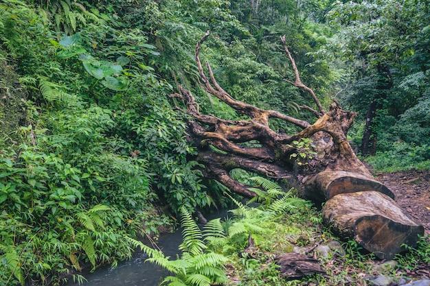Rinjani nationalpark, lombok, indonesien Kostenlose Fotos