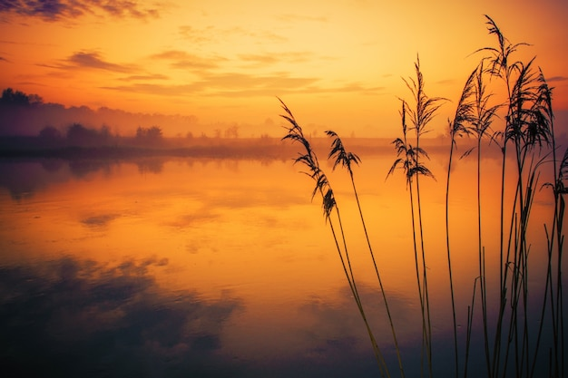 River reeds sunset scenery Kostenlose Fotos