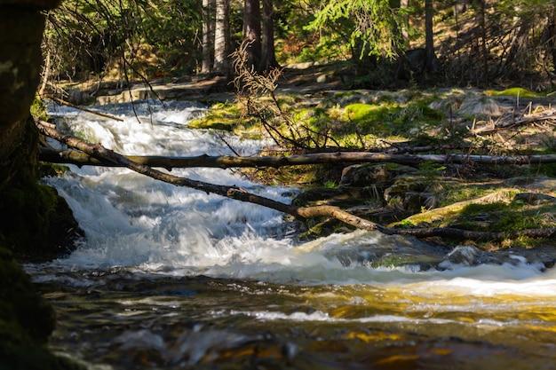 Rocky mountain stream und gummibäume Premium Fotos