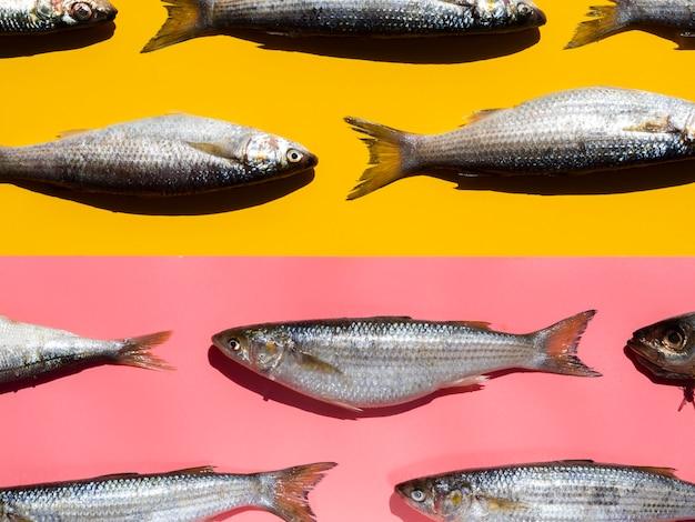 Rohe fische der nahaufnahme mit kiemen Kostenlose Fotos