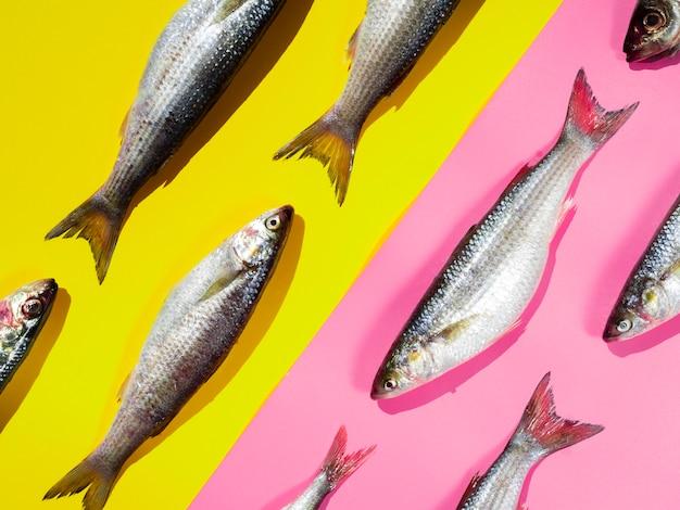 Rohe makrelen der nahaufnahme mit kiemen Kostenlose Fotos