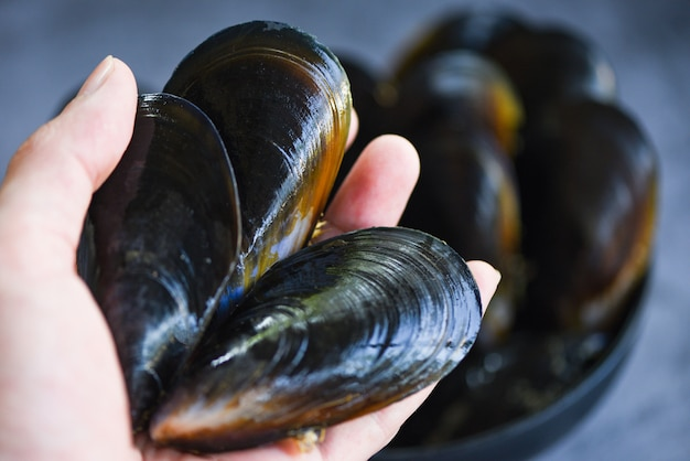 Rohe miesmuscheln an hand - frische meeresfrüchteschalentiere auf eis im restaurant oder für verkauf im marktmuschel-oberteillebensmittel Premium Fotos