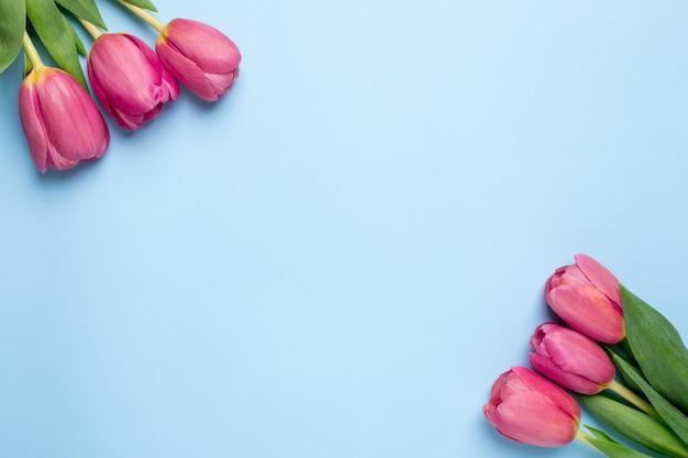 Rosa blüht tulpen auf einer blauen oberfläche Premium Fotos