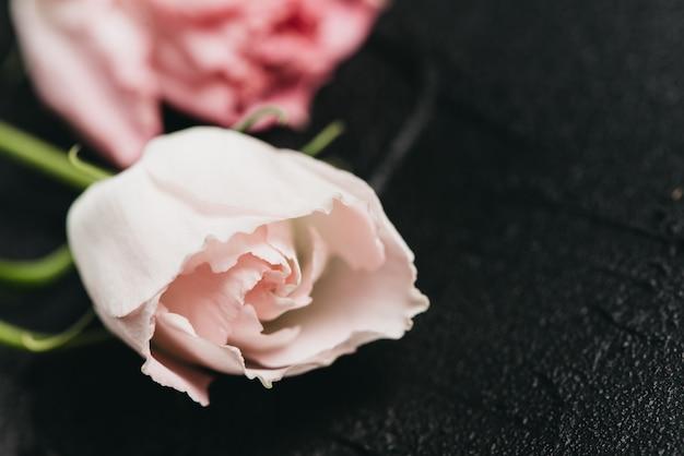 Rosa blume auf einem dunklen zement hintergrund Premium Fotos