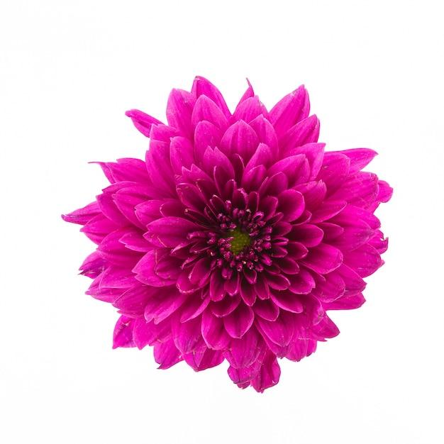 Rosa Blume auf einem weißen Hintergrund | Download der kostenlosen Fotos