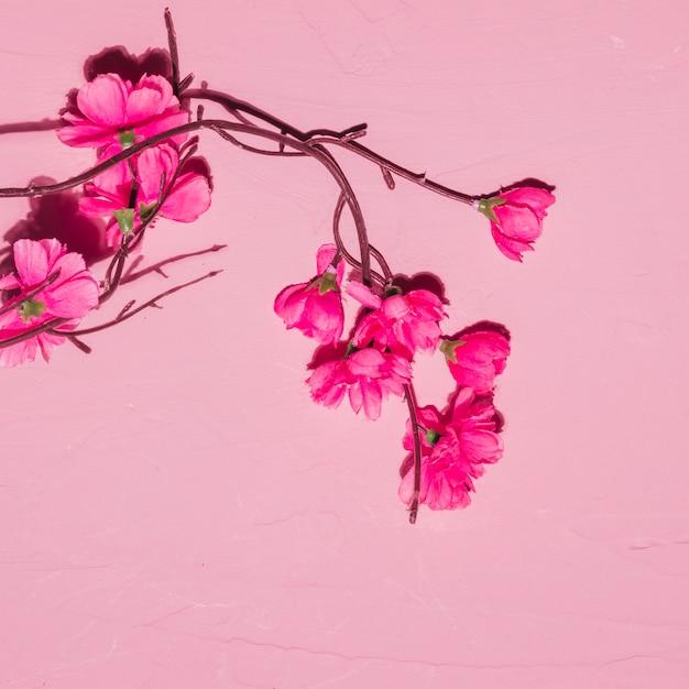 Rosa blumen in einer niederlassung Kostenlose Fotos