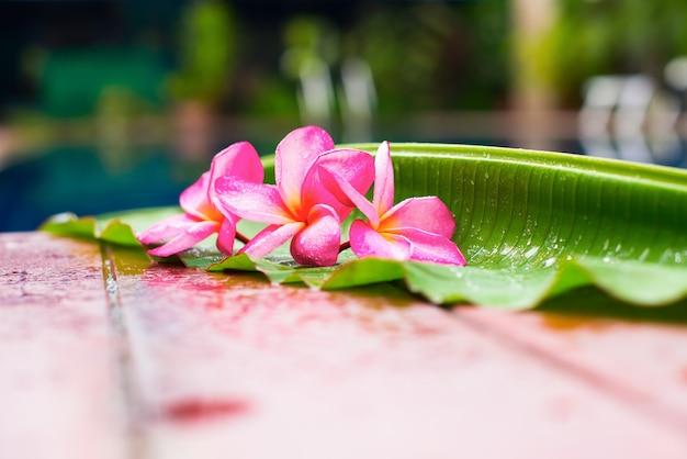 Rosa frangipani in der nähe von pool copy space Premium Fotos
