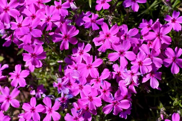 Rosa frühlingsblumen Kostenlose Fotos