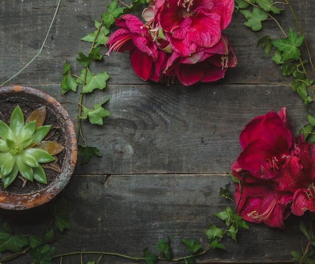 Rosa gänseblümchen und succulent auf einem holztisch Kostenlose Fotos