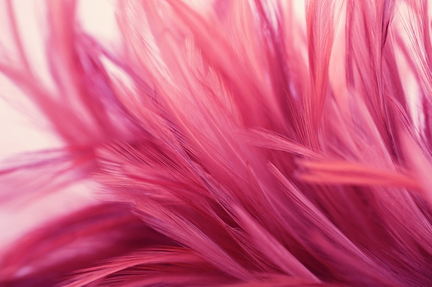 Rosa hühnerfedern in der weichen und unschärfeart für hintergrund Premium Fotos