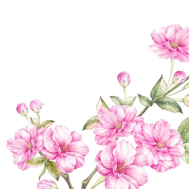 Rosa kirschblüte blüht niederlassung. Premium Fotos