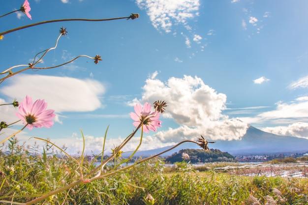 Rosa kosmosblumen, die mit blühen Premium Fotos